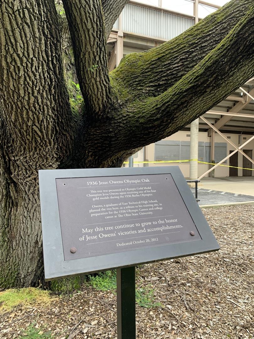 Owens tree 1_Photo Andrea Gyorody 2020 (1).JPG