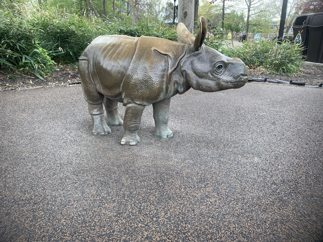 Baby Indian Rhino View 1