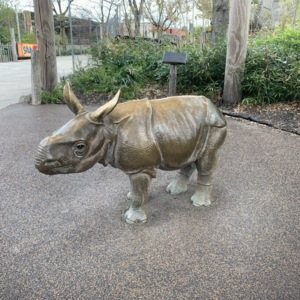 Baby Indian Rhino View 2