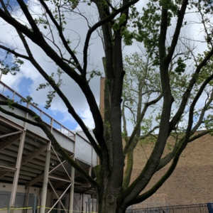 Owens tree 8_Photo Andrea Gyorody 2020 (1).JPG