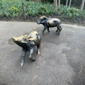 Skeeter, Baby Warthogs Close Up