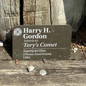Tory's comet plaque2.jpeg
