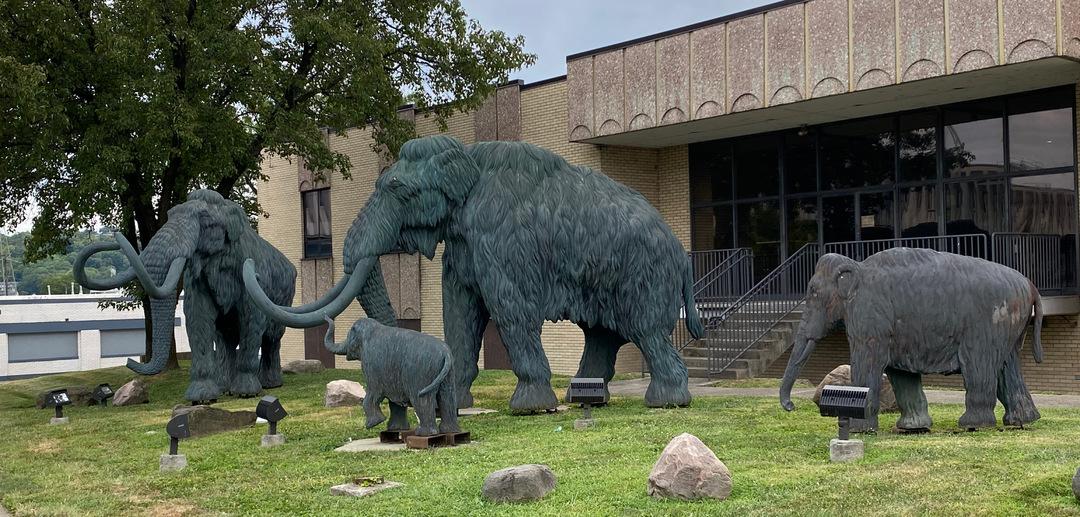 Woolly mammoths photo1.jpeg
