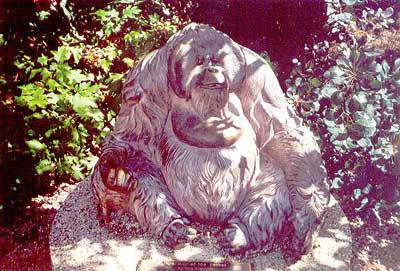 01074 Old Man of the Forest.jpg