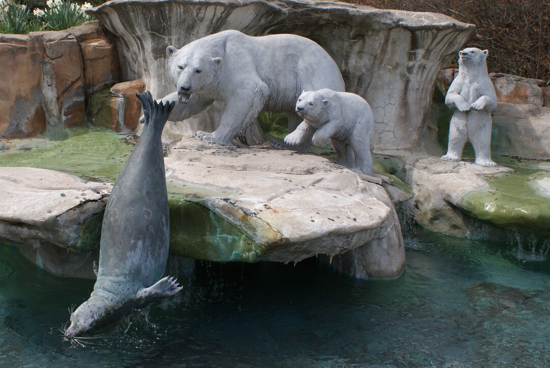 Polar Bears and Seal Full View