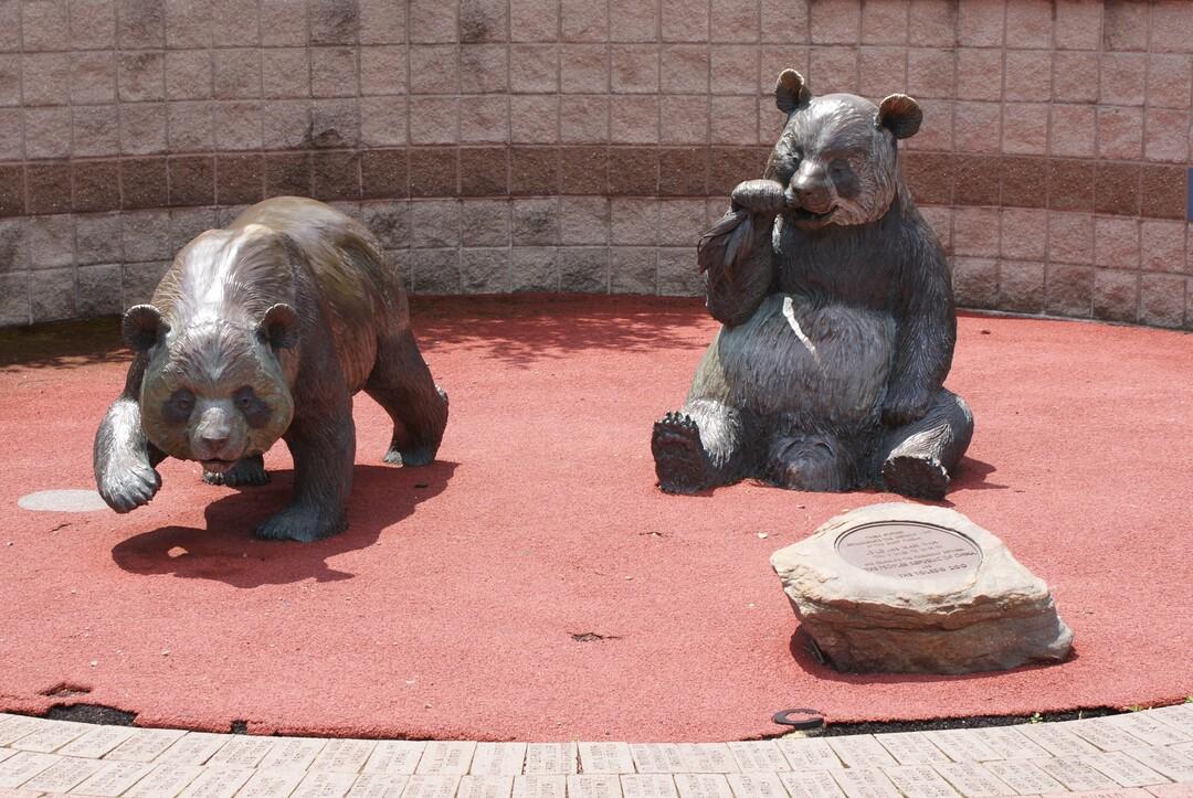 Giant Pandas.JPG