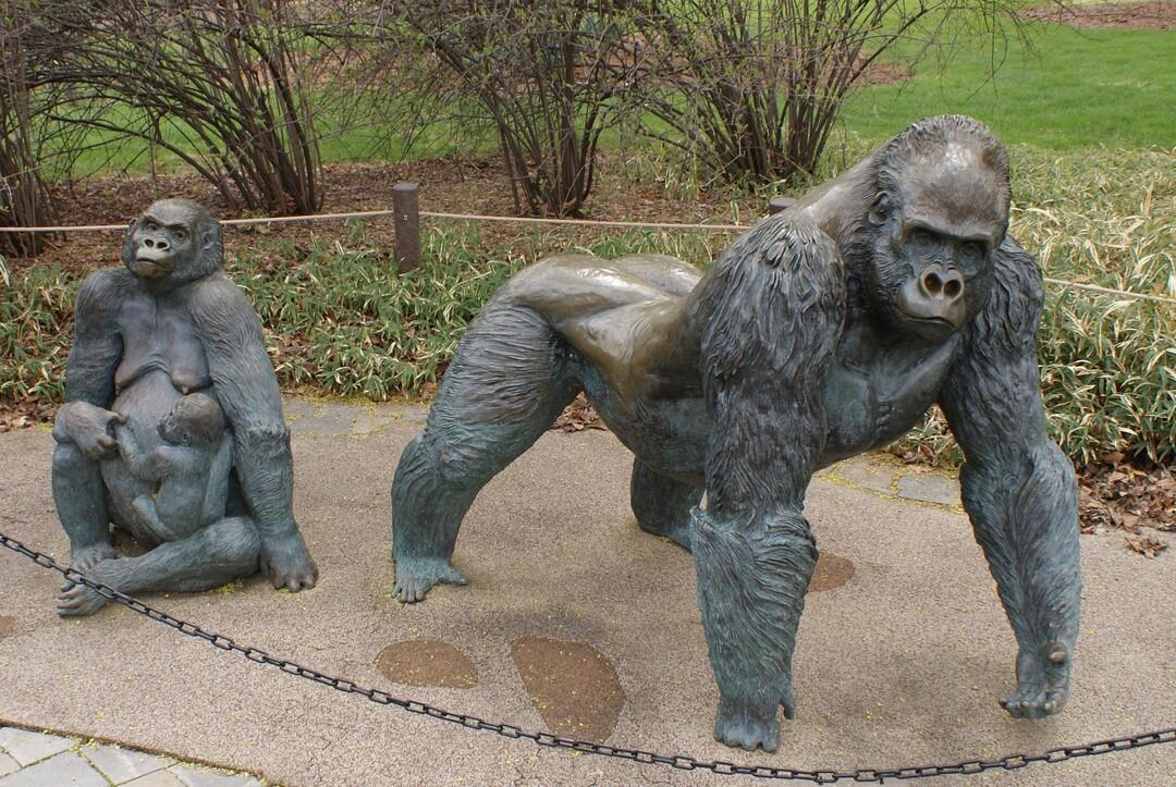 Gorilla Family All.JPG