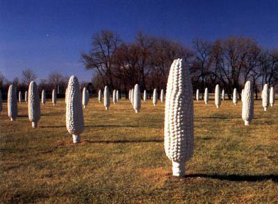 00986 Field of Corn.jpg