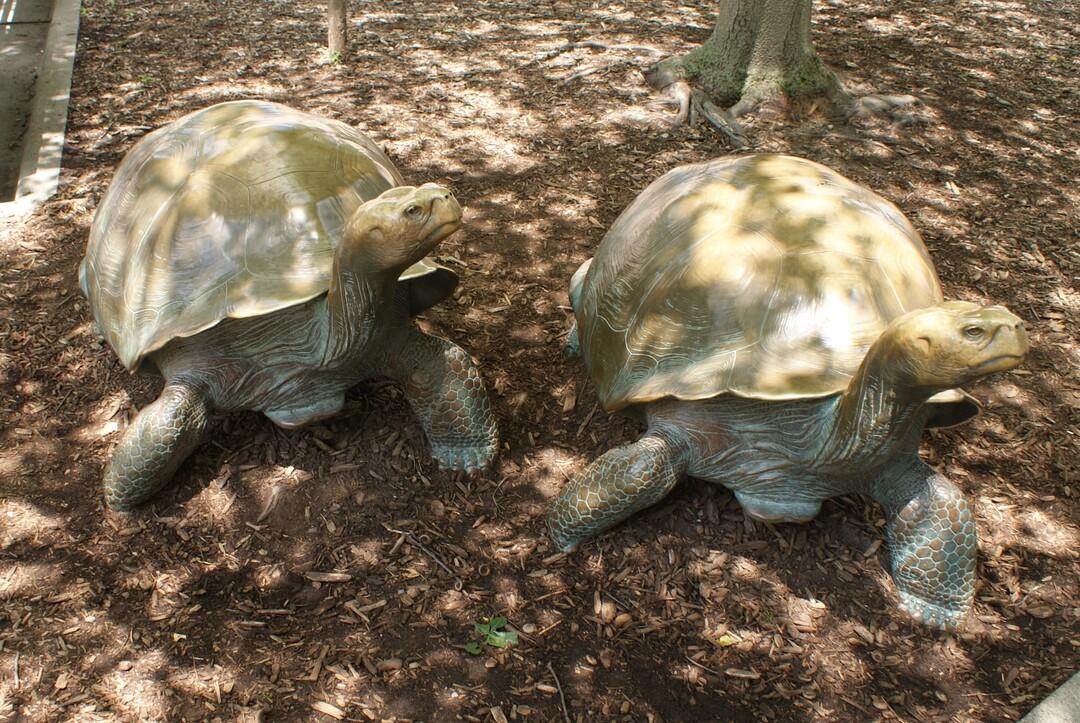 Tortoises Front.JPG