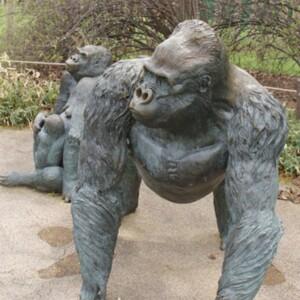 Gorilla Family, Male