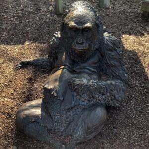 Female Gorilla Front View