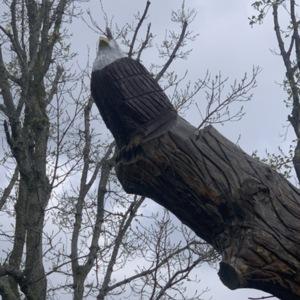 Back Eagle View, Eagle Nest