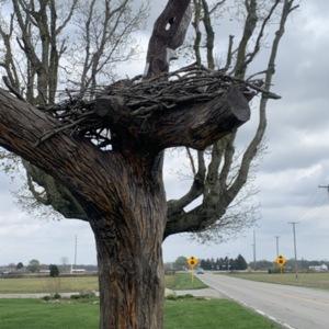Front Eagle View Eagle Nest