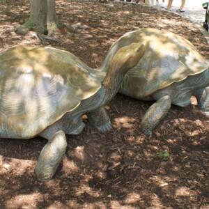 Tortoises Left.JPG