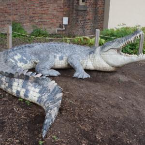 Crocodile Side.JPG