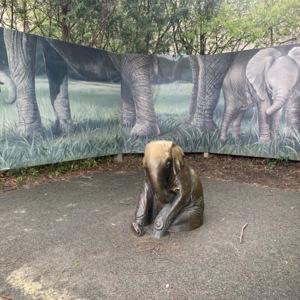 Elephant Child Distant View