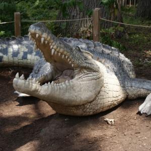 Crocodile Close.JPG