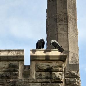 The Kenyon Crows- Close up