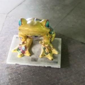 Yellow Frog Above.jpg