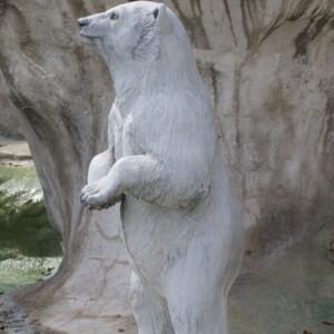 Polar Bears and Seal Closeup of Sta