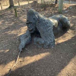 Male Gorilla Side View