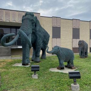 Woolly mammoths photo2.jpeg