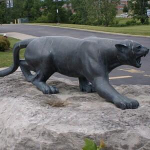Mountain Lion Side.JPG